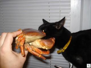 BobSniffCrab