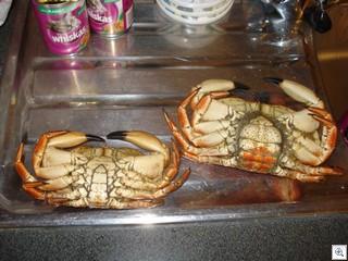 CrabAss