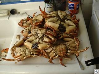 CrabBoiled